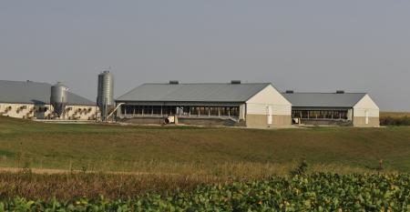 Hog Barn near soybean field