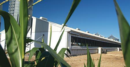 hog barn as seen through cornfield