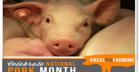 Real pig farming National Pork Month