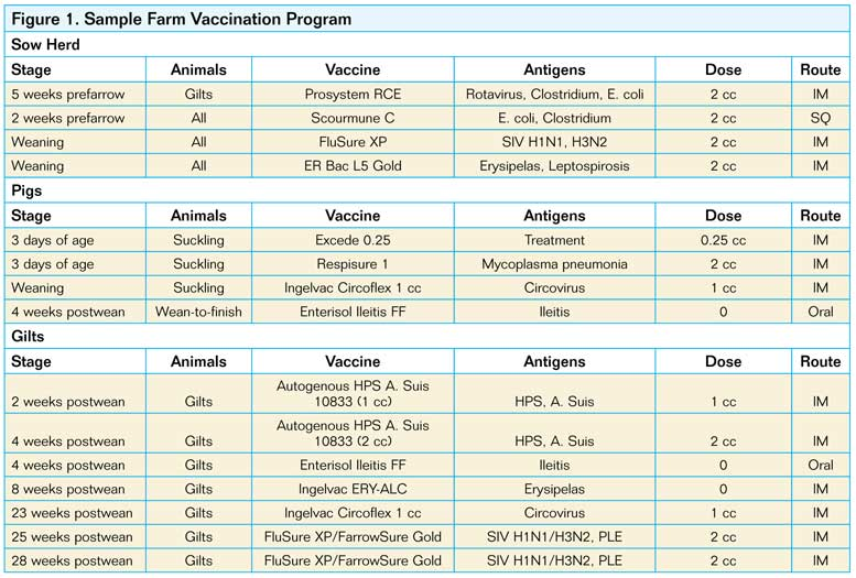 Selecting The Right Vaccine National Hog Farmer