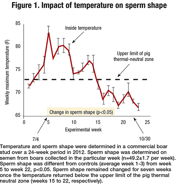The Effects Of Heat On Sperm