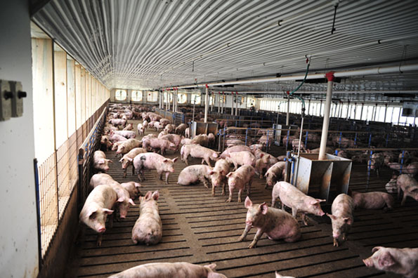 Keeping The Numbers In Perspective National Hog Farmer